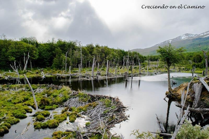 Laguna Negra, Ushuaia