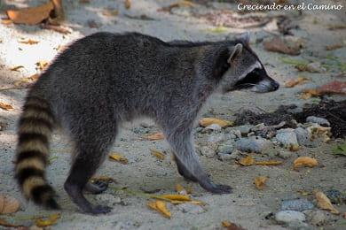 que visitar en el parque nacional cahuita en costa rica