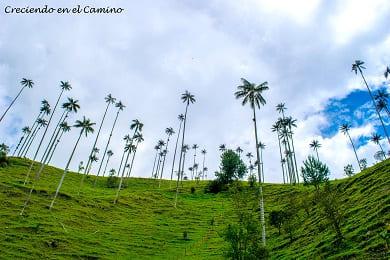 que visitar y hacer en el valle de cocora en colombia
