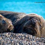 Que hacer y visitar en Puerto Madryn y Península de Valdés, Argentina