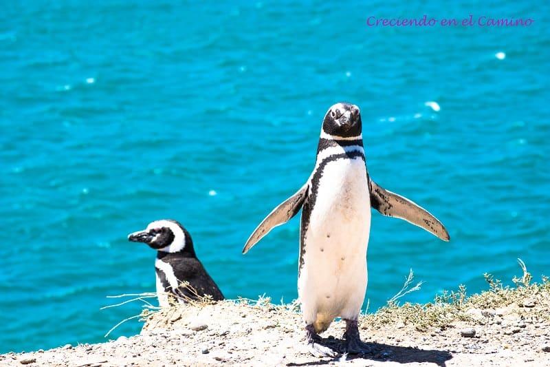pingüinos de Magallanes peninsula de valdes
