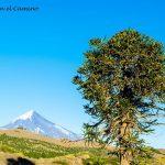Que hacer y visitar en la provincia de Neuquén, Argentina