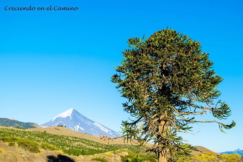 Pehuenes, Junín de los Andes