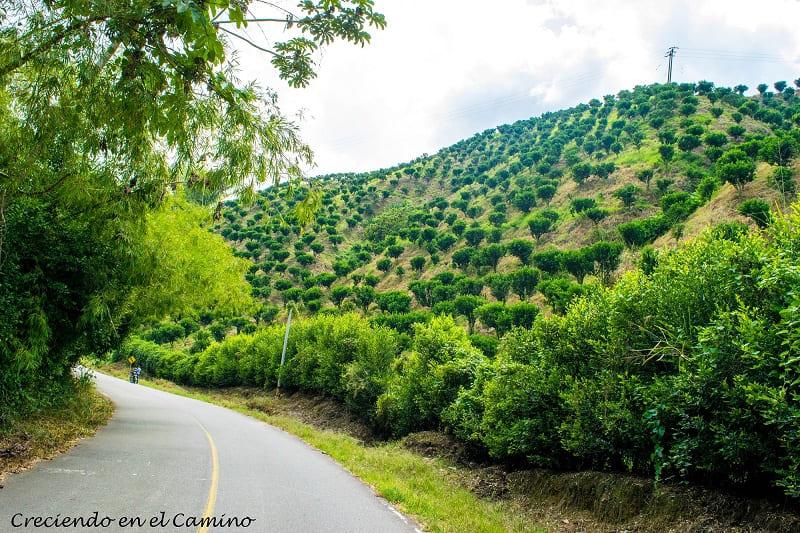 Que visitar y hacer en Pijao, Colombia
