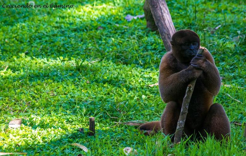 Monos de todos los tamaños Reserva de Yanacocha, Puyo