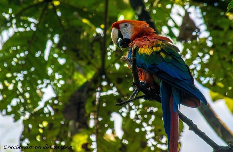 guacamayos Reserva de Yanacocha, Puyo