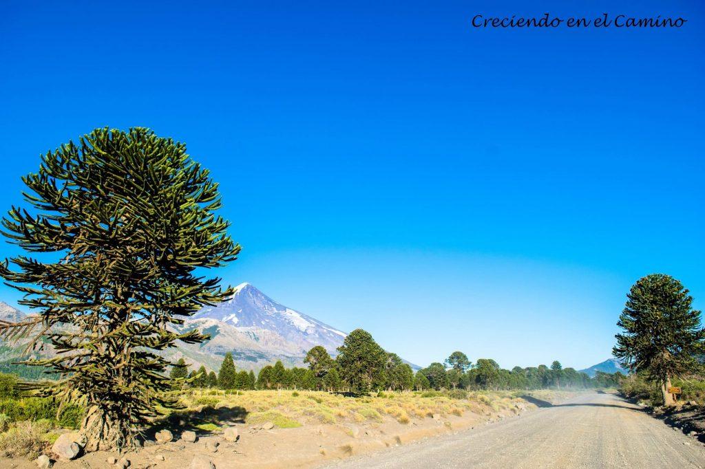Junín de los Andes, Ruta 40
