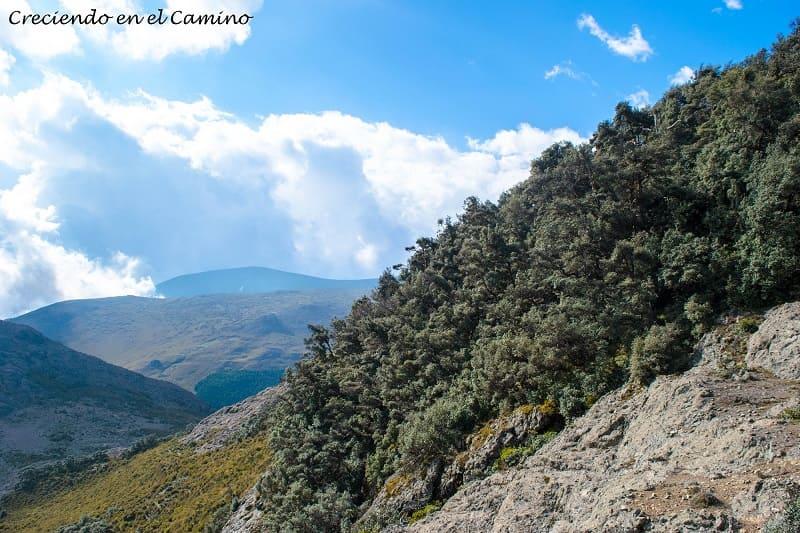 bosque de Polylepis parque nacional chimborazo ecuador