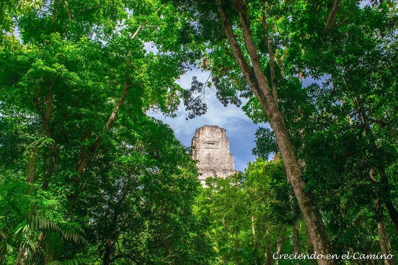 El Templo del Gran Sacerdote, Tikal